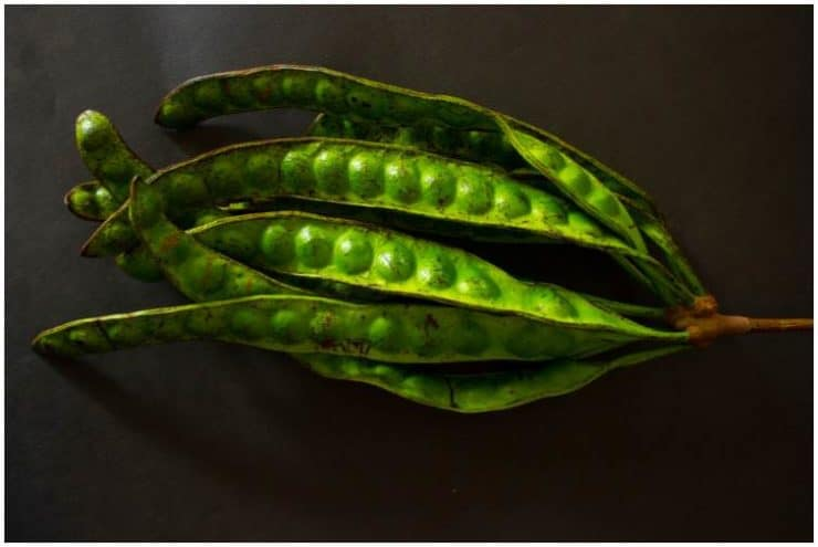 Petai (Stink) Beans (Parkia Speciosa) Benefits, Nutrition Facts, Side Effects