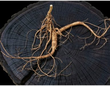 Ginkgo Biloba vs Ginseng - Differences