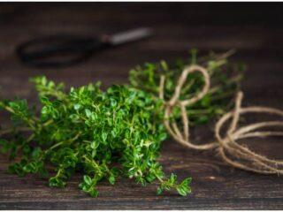 Thyme vs Oregano – Differences In Taste & Health Benefits