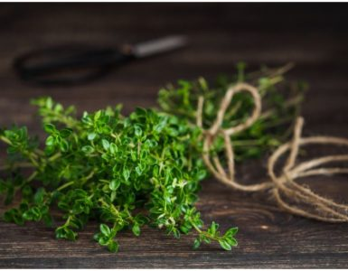 Thyme vs Oregano – Differences In Taste & Health Benefits