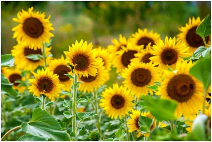List Of 10 Plants Used In Phytoremediation