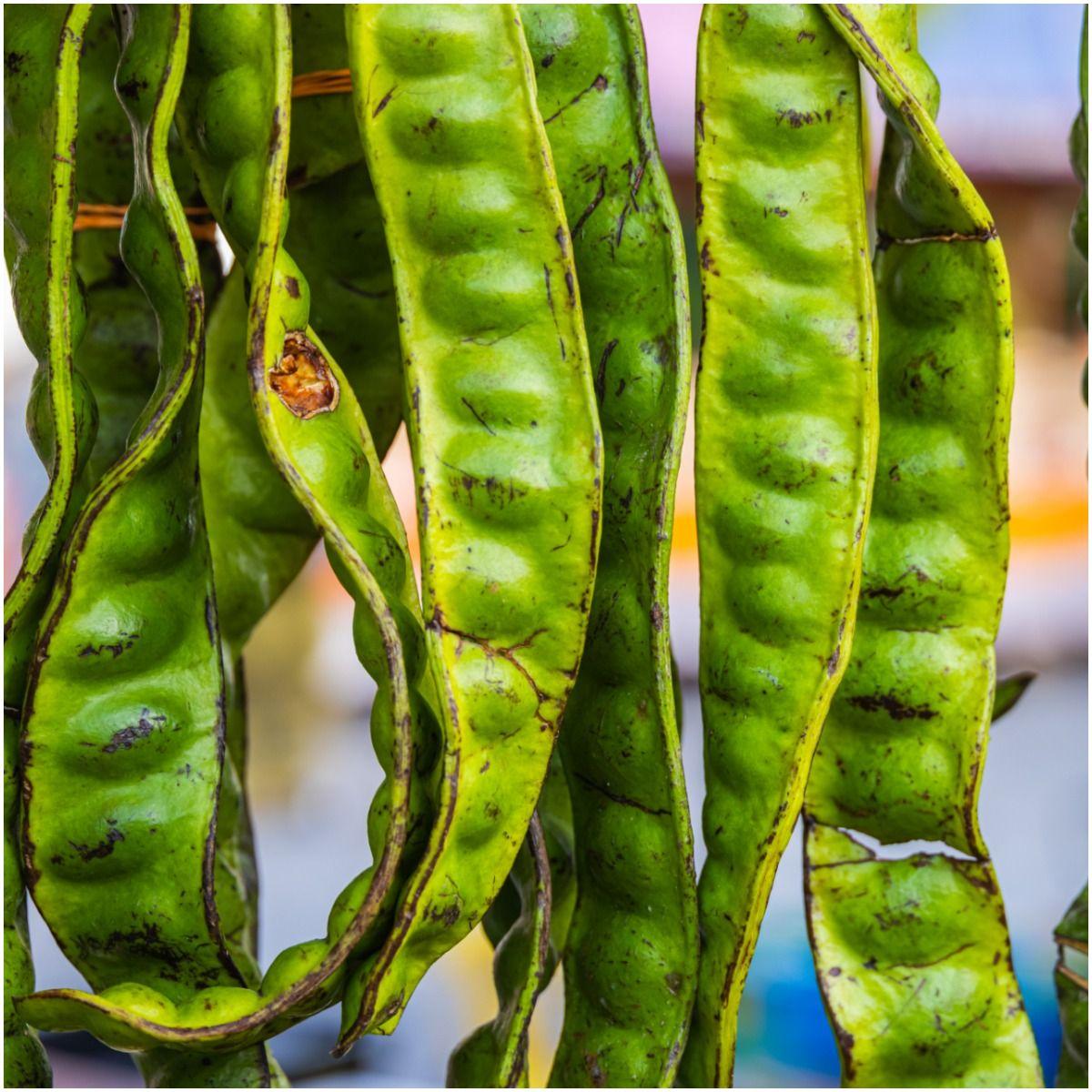 Petai (Stink) Beans Benefits